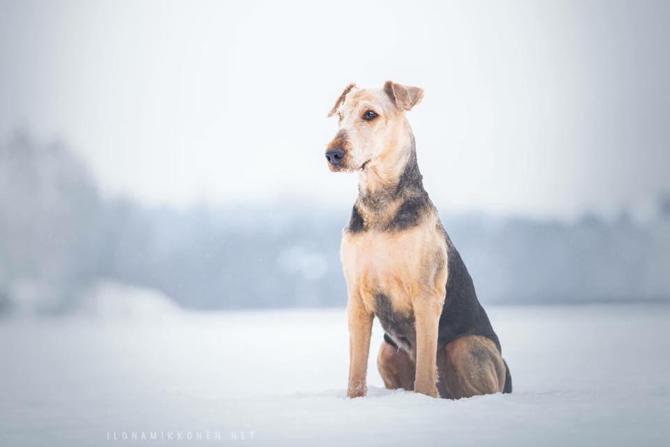 Luonnon vaarat koiralle