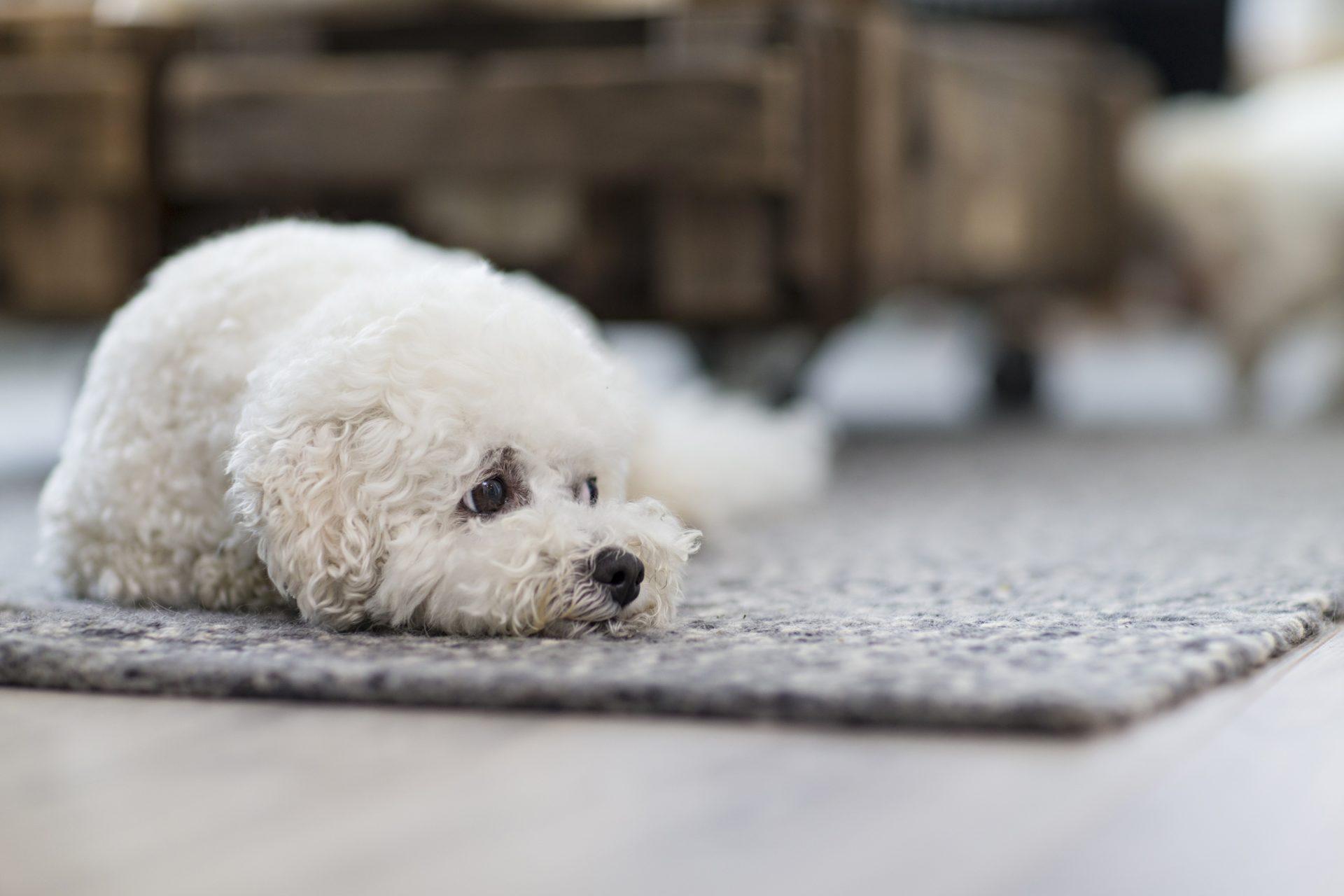 Koiran myrkytykset