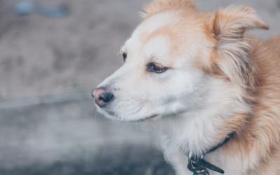 Tepon tarina: Syvä haava koiralla